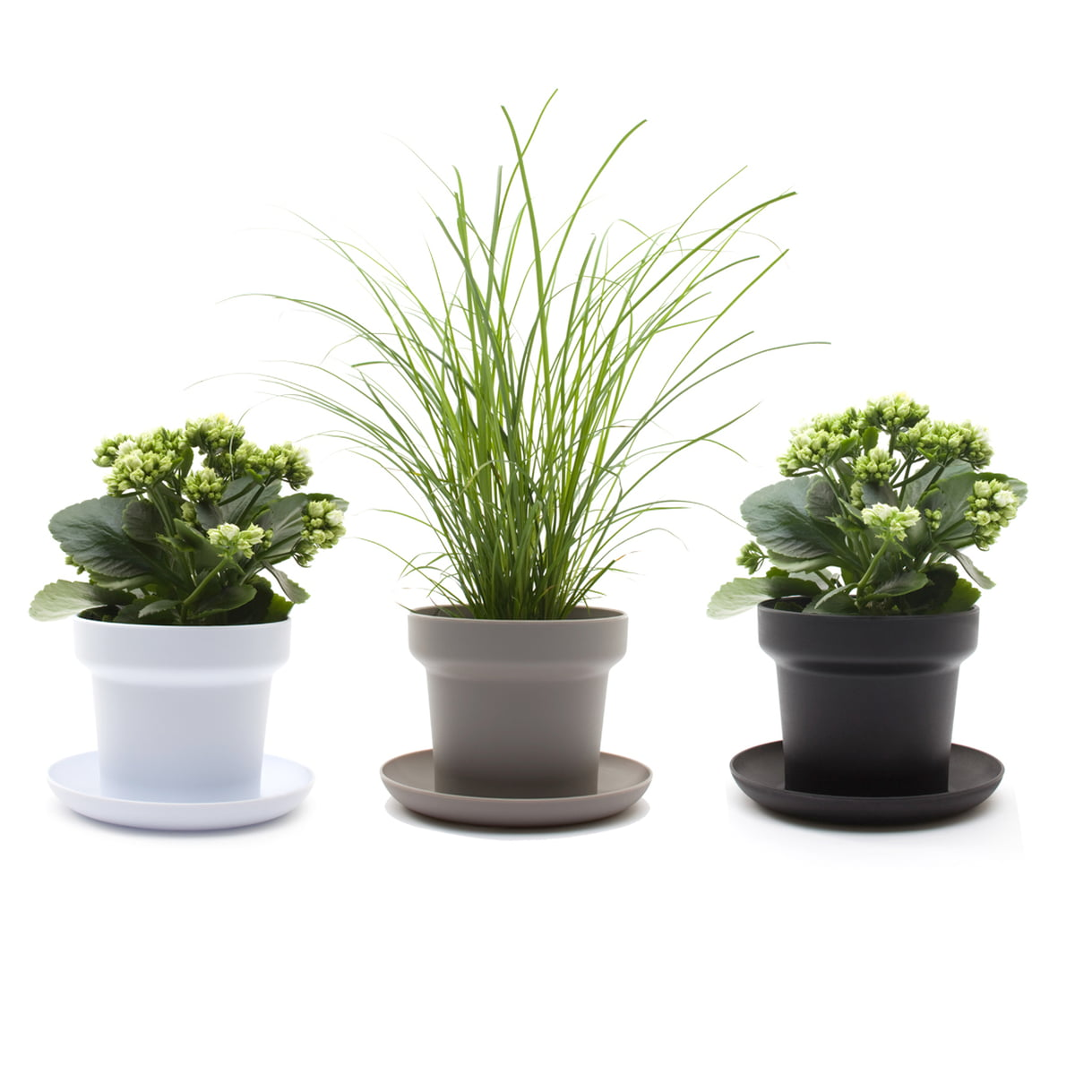 the green plant pot by authentics. Black Bedroom Furniture Sets. Home Design Ideas