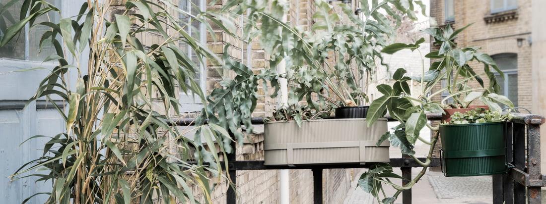 Flashsale: Balkonbepflanzung