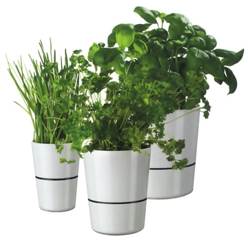 Rosti Mepal - Hydro herb container - group