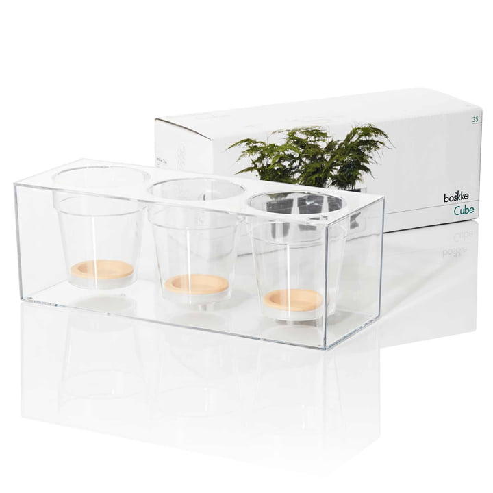 Boskke - Cube, transparent, triple - package