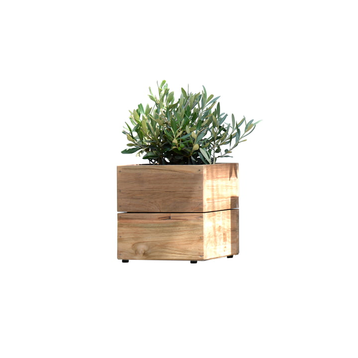 Flower Pots Minigarden in Teak Wood without Rack by Jan Kurtz in Small