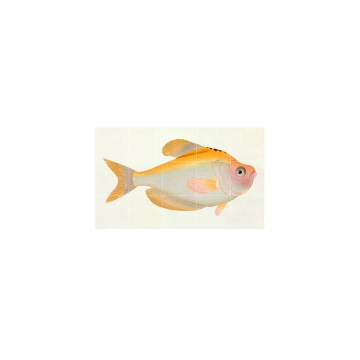 Yellow Fish (Bloch) 100 x 60 cm by IXXI