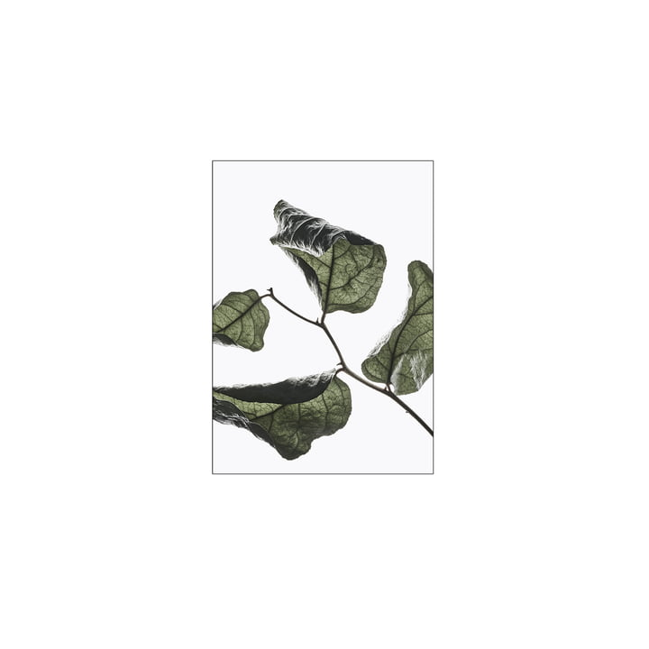 Floating Leaves No. 3, A5 of Moebe