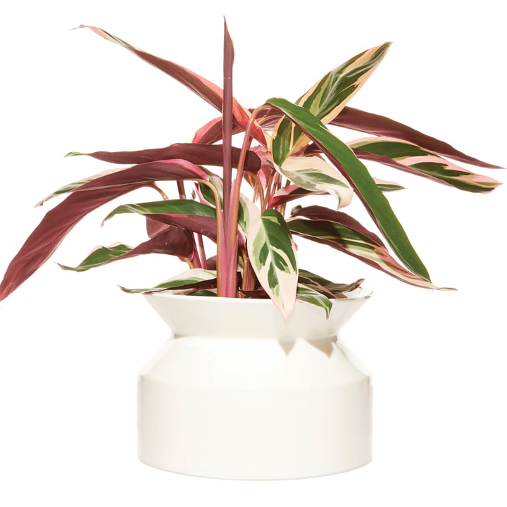 Spool plant pot Large by Boskke in white