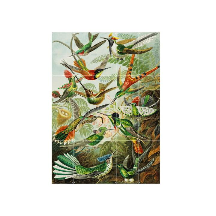 Hummingbirds (Haeckel) 100 x 140 cm from IXXI