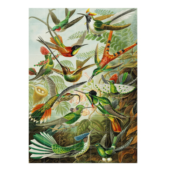 Hummingbirds (Haeckel), 140 x 200 cm from XXI