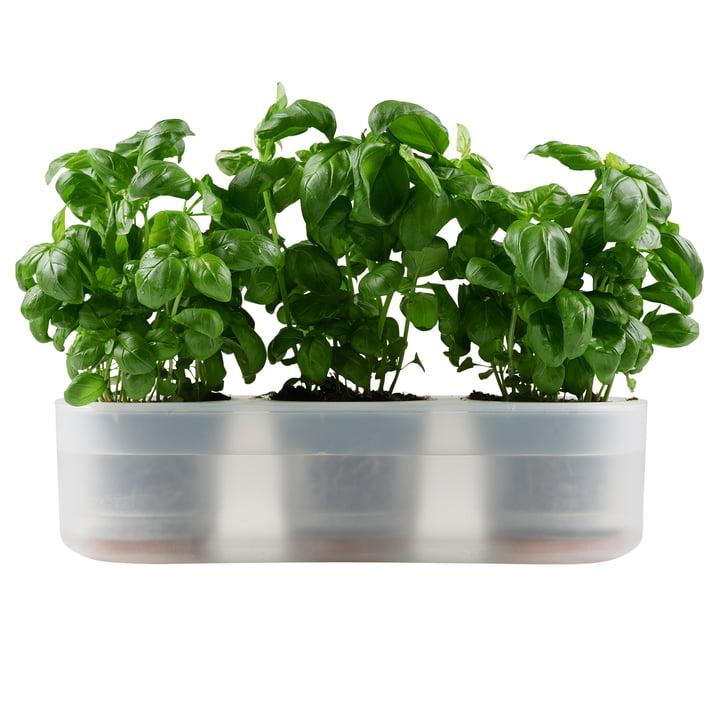 Till Planter Trible, transparent from Boskke