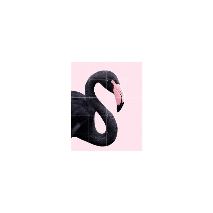 Black flamingo poster, 80 x 100 cm by IXXI