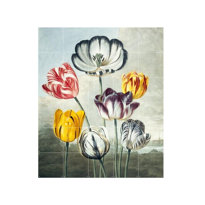 Tulips mural 100 x 120 cm from IXXI