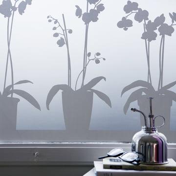 Orchid Window Film
