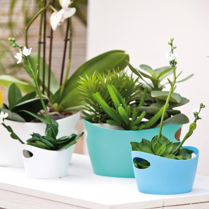 Bottichelli washtubs as practical flowerpots